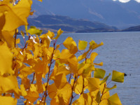 Autumn in Wanaka region